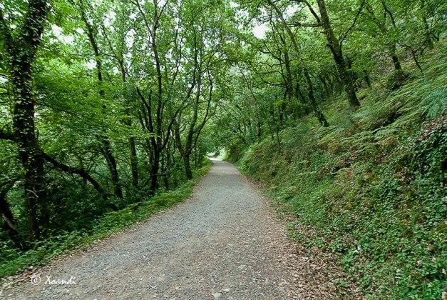 Camiño da Fervenza do Toxa (Galicia)