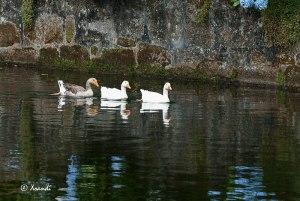 Nadando en el estanque