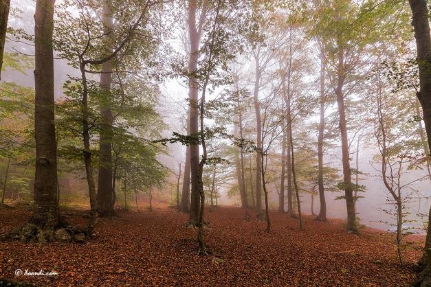 Niebla de otoño en el Montseny